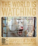 Visit WFFT.org to learn more and help make a difference