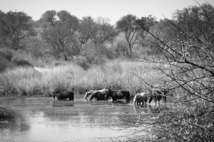 Horses in the river outside our tent