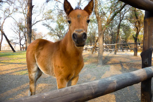 One of AP's foals