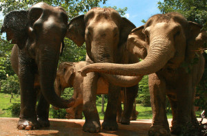 Boon Lott's Elephant Sanctuary