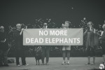 No More Dead Elephants - Remembering Watoto