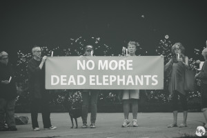 No More Dead Elephants - Sanctuary Now