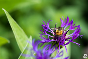 Busy, busy bee
