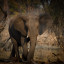 Ten Facts About Elephants
