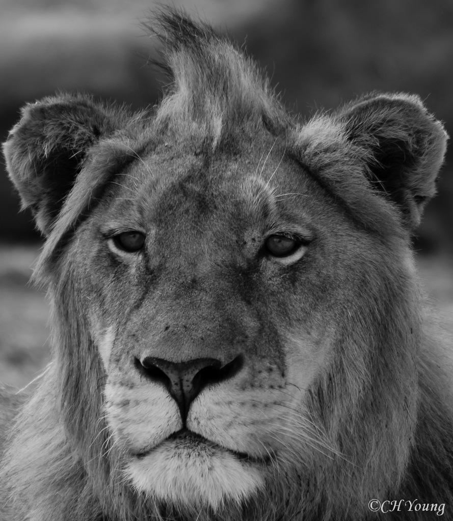 All hail Zulu! All hail the King!