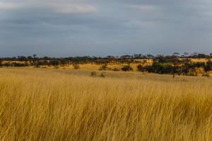 Landscape at Antelope Park