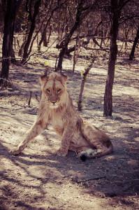 "Goodbye Moyo. You are no longer ""the fake lion."""