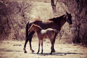 Goodbye Kiara + foal