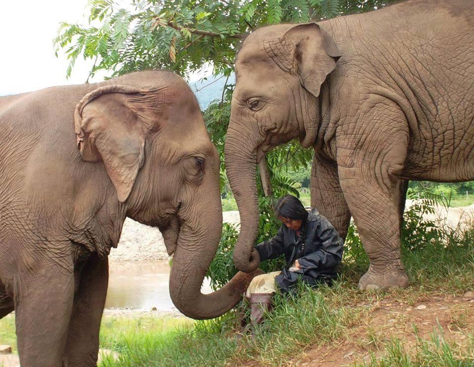 Elephant Nature Park + Boon Lott's Elephant Sanctuary ...  Elephant Nature...