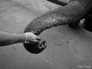 Craig feeds one of ENP's elephants