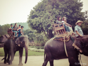 Tourists in northern Thailand enjoying a ride on elephants that were broken and beaten.