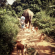 Morning walk at BLES with Lotus, her mahout, and the usual canine suspects.