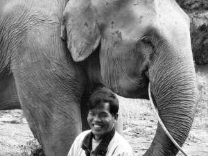 Mahout + Elephant + BLES = Love