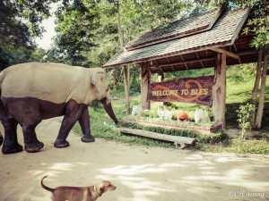 Welcome to Boon Lott's Elephant Sanctuary