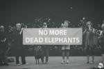 No More Dead Elephants - Remembering Watoto